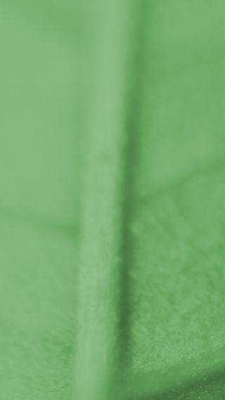 Обои на телефон макро, фото, природа, одиночество, листья, зеленые, leaft alone, closeup