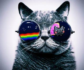 Обои на телефон комедия, кошки, забавные, funny cat