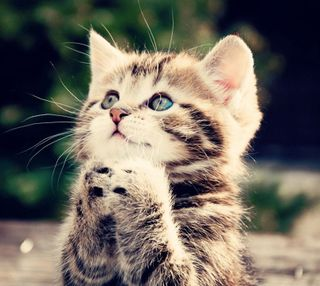 Обои на телефон вера, религия, молитва, милые, котята, восхитительные, бог, praying