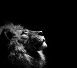 Обои на телефон лев, король, животные, джунгли, king of the jungle
