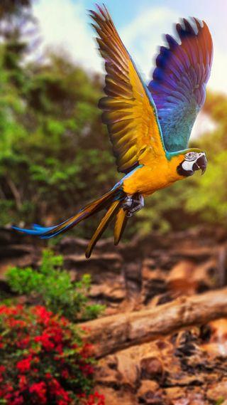 Обои на телефон бразилия, птицы, macaw