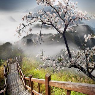 Обои на телефон туман, путь, природа, деревья, горы, trees mountains, misty path