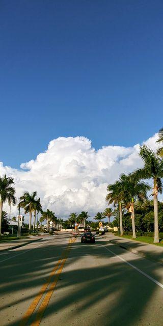 Обои на телефон солнечный свет, пальмы, облака, деревья, sunshine state