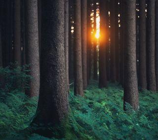 Обои на телефон природа, пейзаж, лес, закат, darkdroid