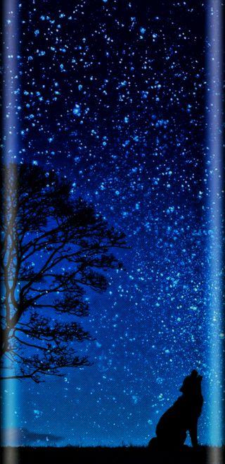 Обои на телефон тьма, дерево, синие, полночь, небо, космос, звезды, грани, глубокие, волк, hdr, edge wolf midnight