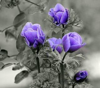 Обои на телефон фото, цветы, цветные, фиолетовые, природа, пейзаж, purple flowers