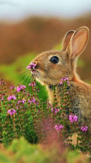 Обои на телефон кролики, милые
