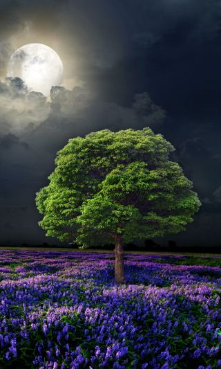 Обои на телефон цветы, поле, ночь, луна, дерево, full
