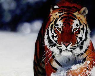 Обои на телефон фантастические, удивительные, тигр, снег, новый, лучшие, крутые, 2012