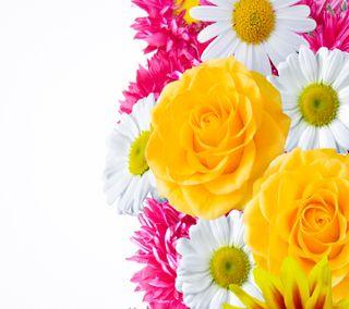 Обои на телефон сад, цветы, приятные, природа, водопад