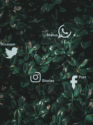 Обои на телефон фейсбук, социальное, растения, инстаграм, whatsapp, sosmed, media