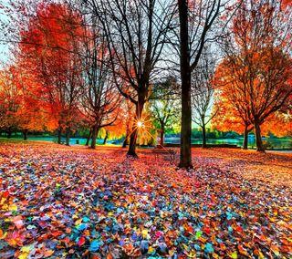 Обои на телефон осень, взгляд, приятные, природа, autumn nature