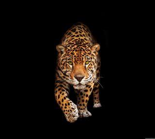 Обои на телефон леопард, любовь, классные, love, 2016