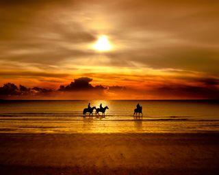 Обои на телефон всадник, пляж, лошадь, восход, вечер, beatiful sunrise