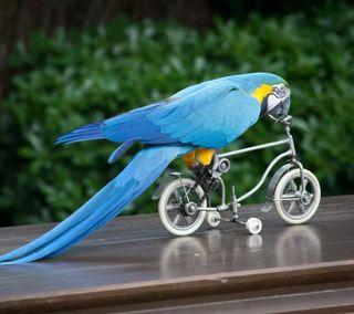 Обои на телефон попугай, скорость, байк