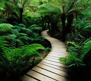 Обои на телефон сад, путь, природа, мост, лес, зеленые, дорога, деревья