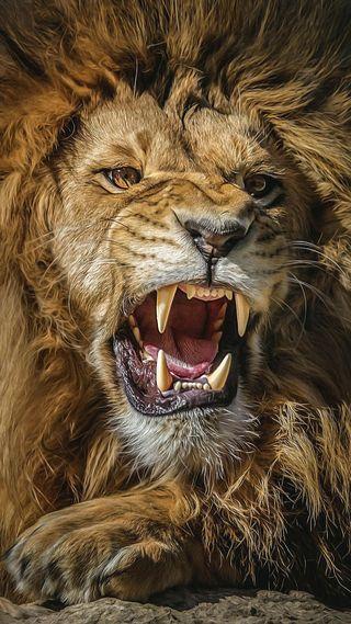 Обои на телефон лев, король, злые, животные, арт, art