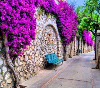 Обои на телефон italy path, spring trees, прекрасные, цветы, деревья, весна, путь, италия