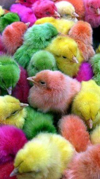 Обои на телефон пасхальные, милые, peeps, chicks