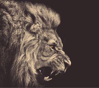 Обои на телефон лев, животные