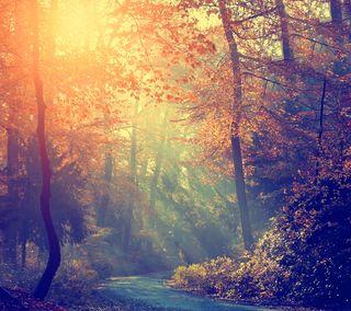 Обои на телефон солнечный свет, цветные, солнце, природа, осень, лес, деревья, thrue