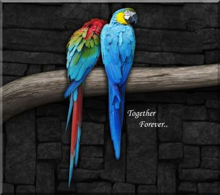 Обои на телефон анимационные, цитата, цветные, птицы, попугаи, пара, любовь, животные, love, hd, 3д, 3d