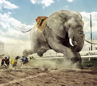 Обои на телефон слон, забавные, escape