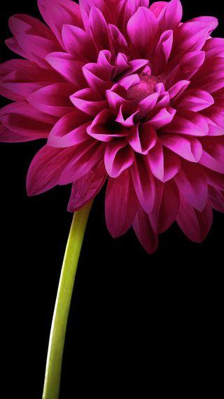 Обои на телефон магия, цветы, цветные, абстрактные, hd