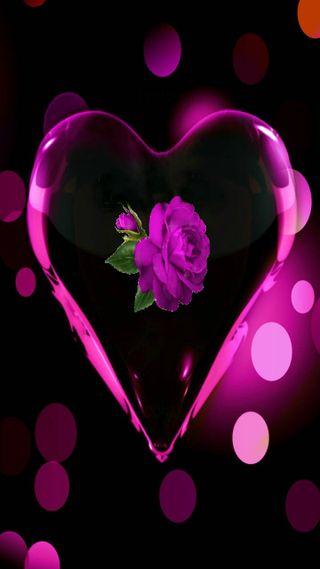 Обои на телефон формы, сердце, розы, heart shape with a rose