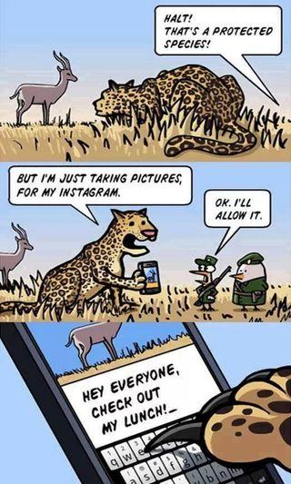 Обои на телефон полиция, тигр, картина, зоопарк, забавные, веселые, lunch