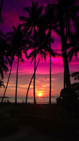 Обои на телефон остров, розовые, tress