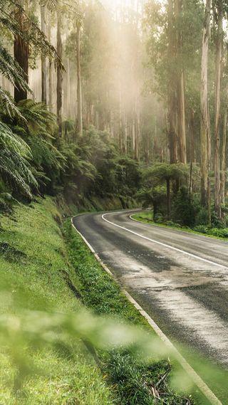 Обои на телефон природа, лес, дорога, деревья, uhd