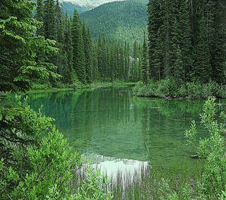 Обои на телефон изумруд, джунгли, растения, озеро, лес, дерево, вода, emerald lake