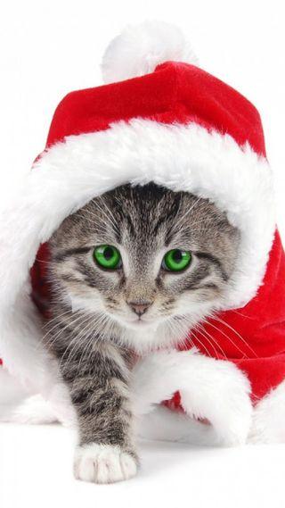 Обои на телефон санта, рождество, милые, любовь, кошки, lovezedge, lovelycat, lovecat, love, everygrounds, bestapp, application