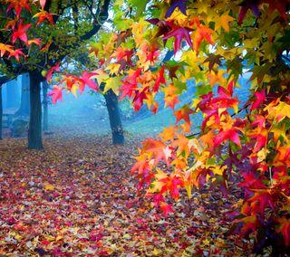 Обои на телефон растения, цветные, осень, листья, лес, дерево, autumn color