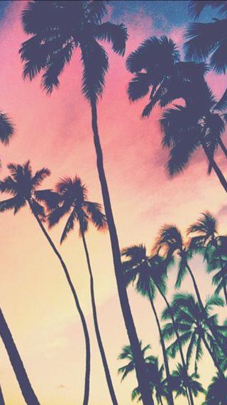 Обои на телефон пальмы, природа, закат, деревья, palmtrees, palms 1, iphon
