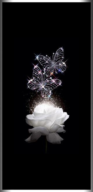 Обои на телефон лотус, черные, цветы, фиолетовые, супер, синие, прекрасные, бабочки