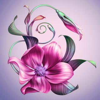 Обои на телефон цветочные, цветы, фон, фиолетовые, абстрактные, lillie