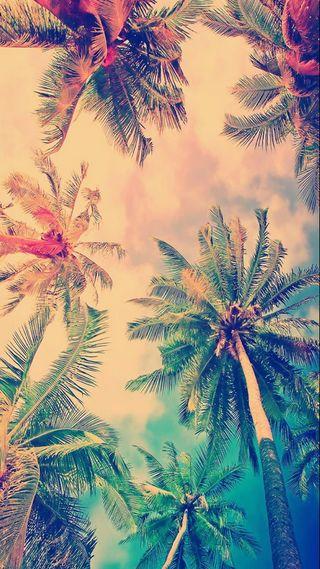 Обои на телефон пальмы, хипстер, palms hipster, dfgd