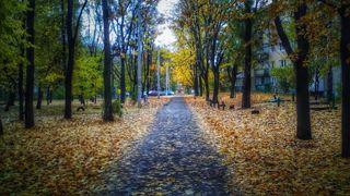 Обои на телефон солнечный свет, осень, лес, желтые, yellow autumn