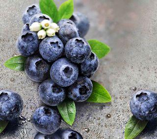 Обои на телефон ягоды, мокрые, цветы, фрукты, милые, листья, капли, sweet fruits