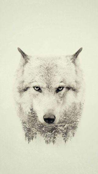 Обои на телефон зима, животные, волк
