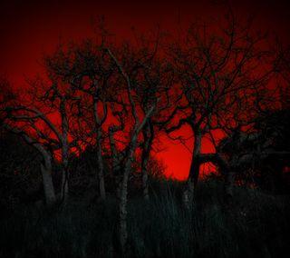 Обои на телефон красые, темные, дерево, лес, растения, джунгли