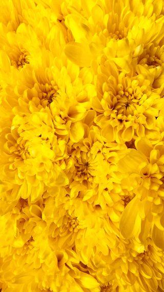 Обои на телефон айфон 5, цветы, желтые, айфон, 1080x1920