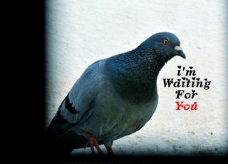Обои на телефон сообщение, цитата, слова, птицы, ожидание, любовь, голубь, waiting for u, pigeon, love