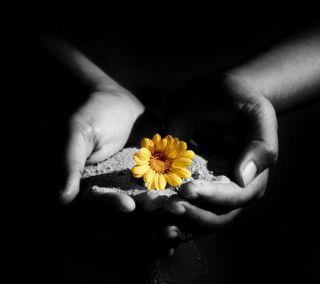 Обои на телефон один, цветы, одиночество, духовные, грустные, healing