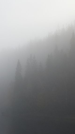 Обои на телефон туманные, туман, мистика, коричневые, серые, лес, деревья, белые, foggy woodlands