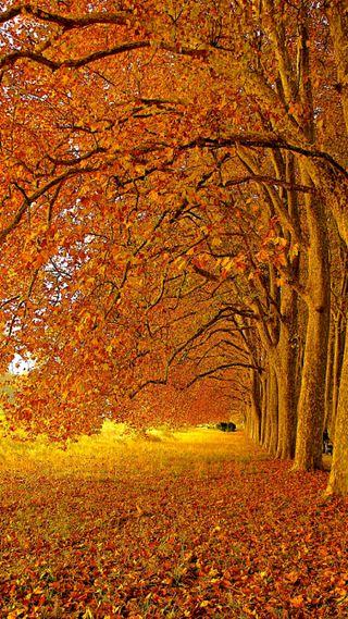Обои на телефон отлично, осень, листья, красые, желтые, leaf fall, avenue