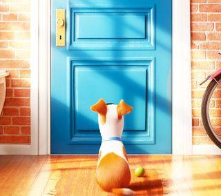 Обои на телефон питомцы, собаки, жизнь, дверь, блокировка, pets life, lock door