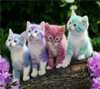 Обои на телефон коты, цветные, стены, милые, кошки, cute cats